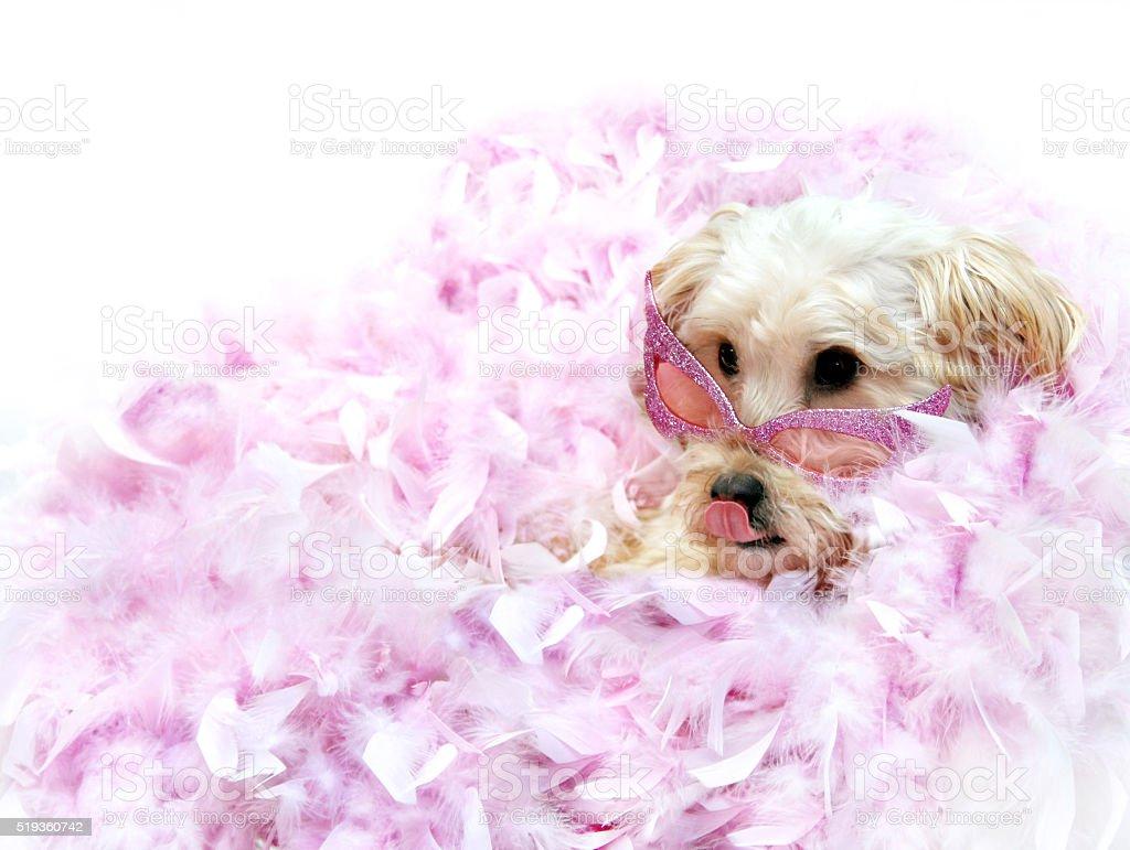 Diva Dog stock photo