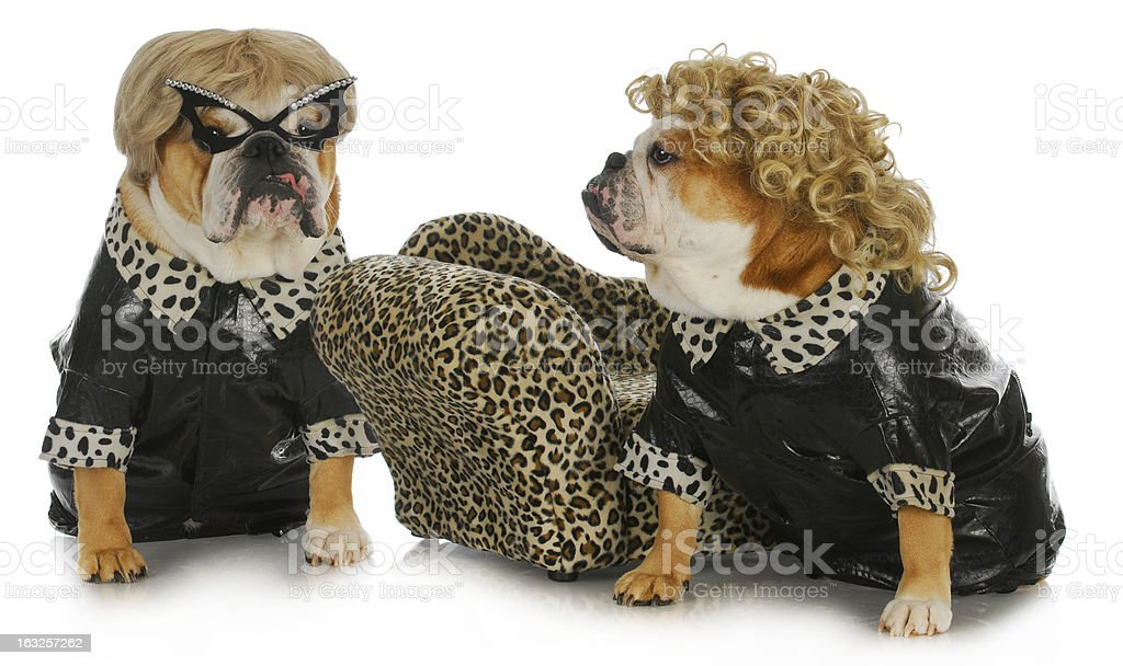 diva dogs royalty-free stock photo