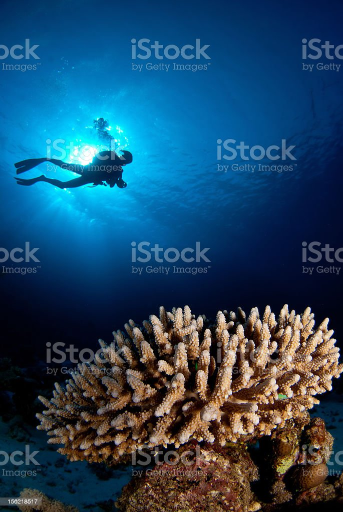 Diver above coral reef royalty-free stock photo