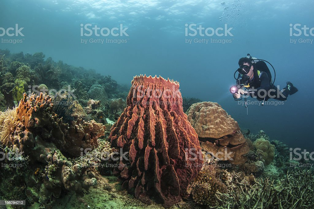 Diver and a barrel sponge royalty-free stock photo
