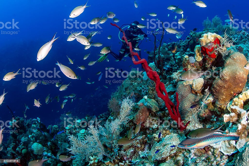 SCUBA Diver and a coral reef stock photo