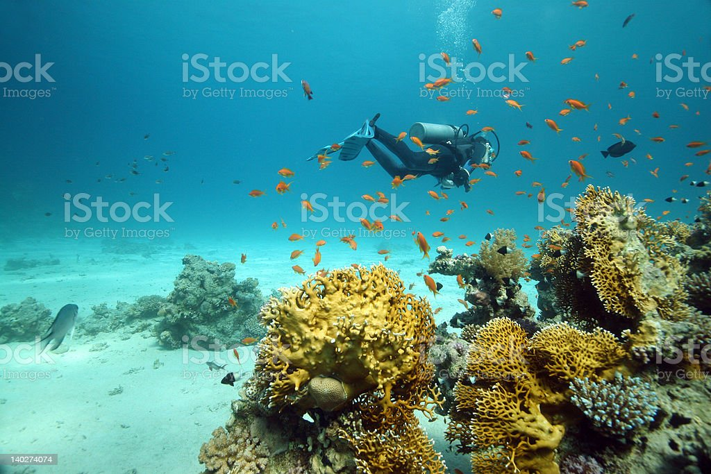 Diver and coral stock photo