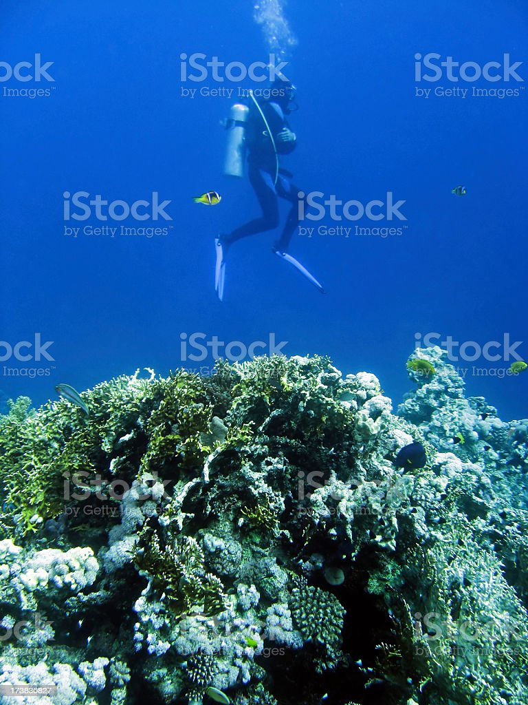 Diver and coral reef royalty-free stock photo