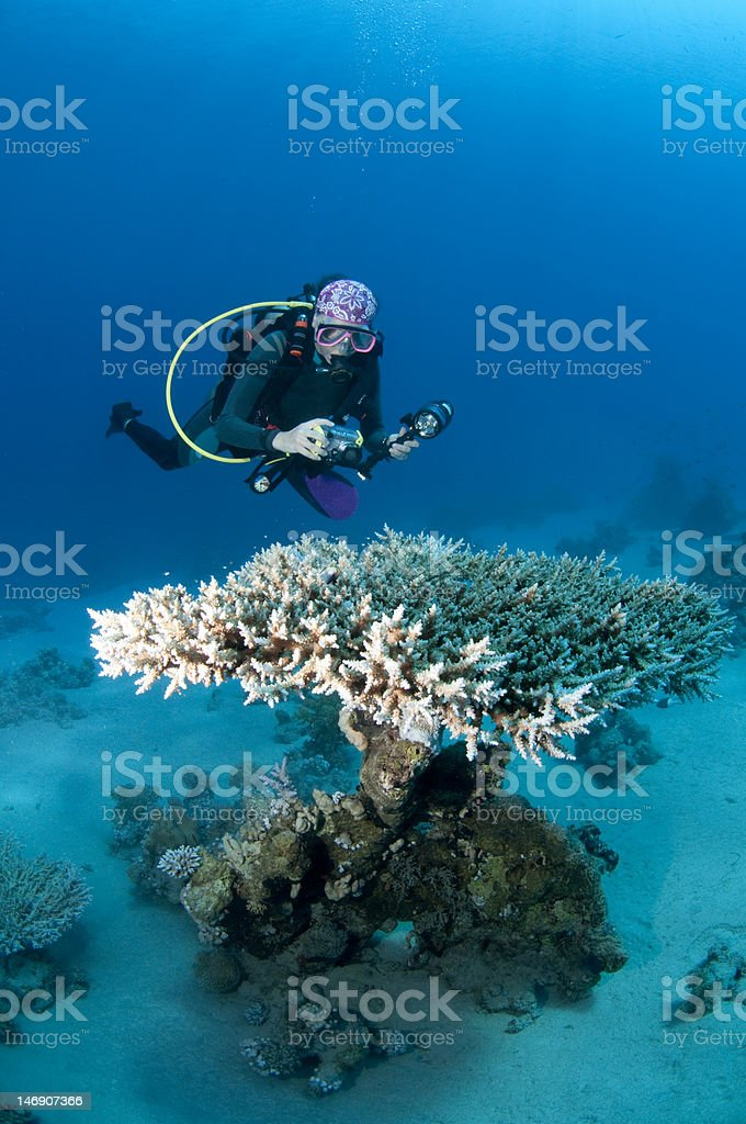 Diver and coral table, underwater photographer, Red Sea royalty-free stock photo