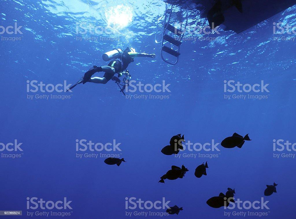 Plongeur et durgon photo libre de droits