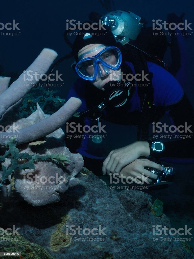 Diver and frogfish stock photo