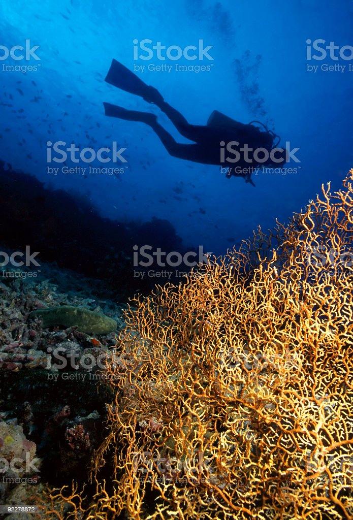 Plongeur et Gorgonian photo libre de droits