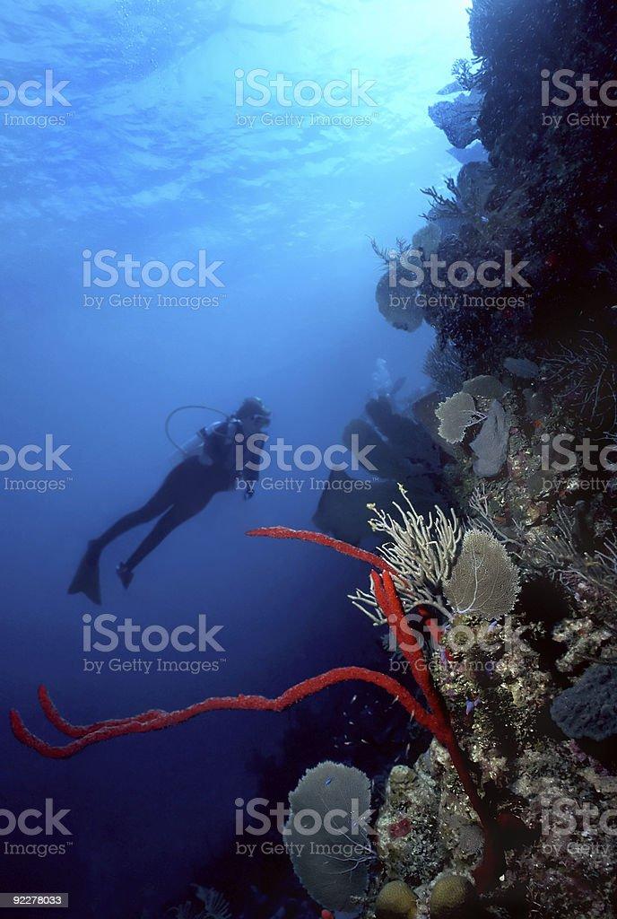 Plongeur et rouge doigt de mer photo libre de droits