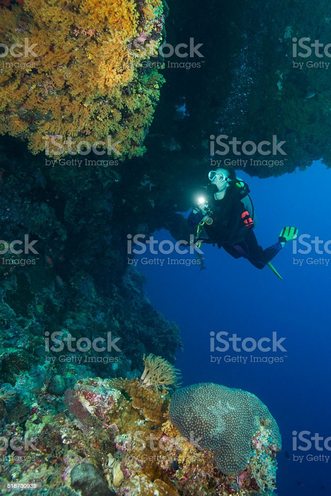 Diver and Sea Life in Palau, Micronesia stock photo