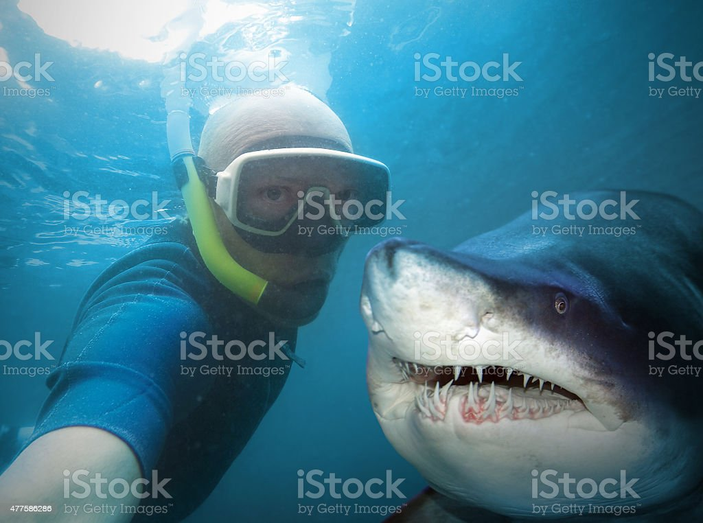 Diver and shark. stock photo
