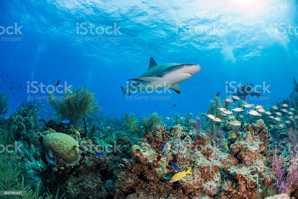 Diver and shark stock photo