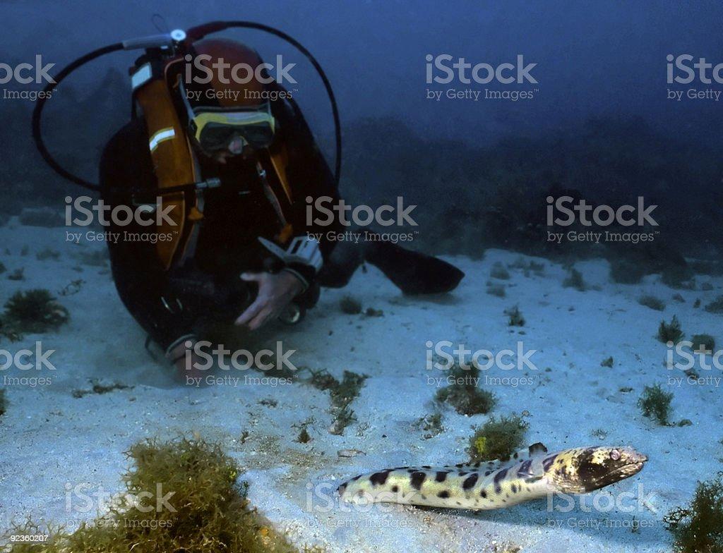 Plongeur et taches Anguille Serpent photo libre de droits