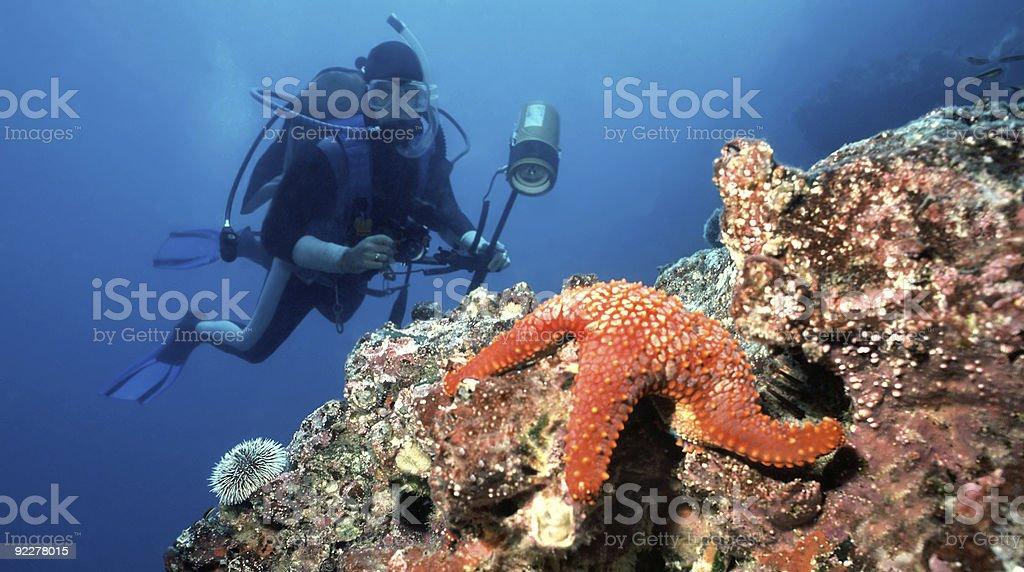 Diver and Starfish stock photo