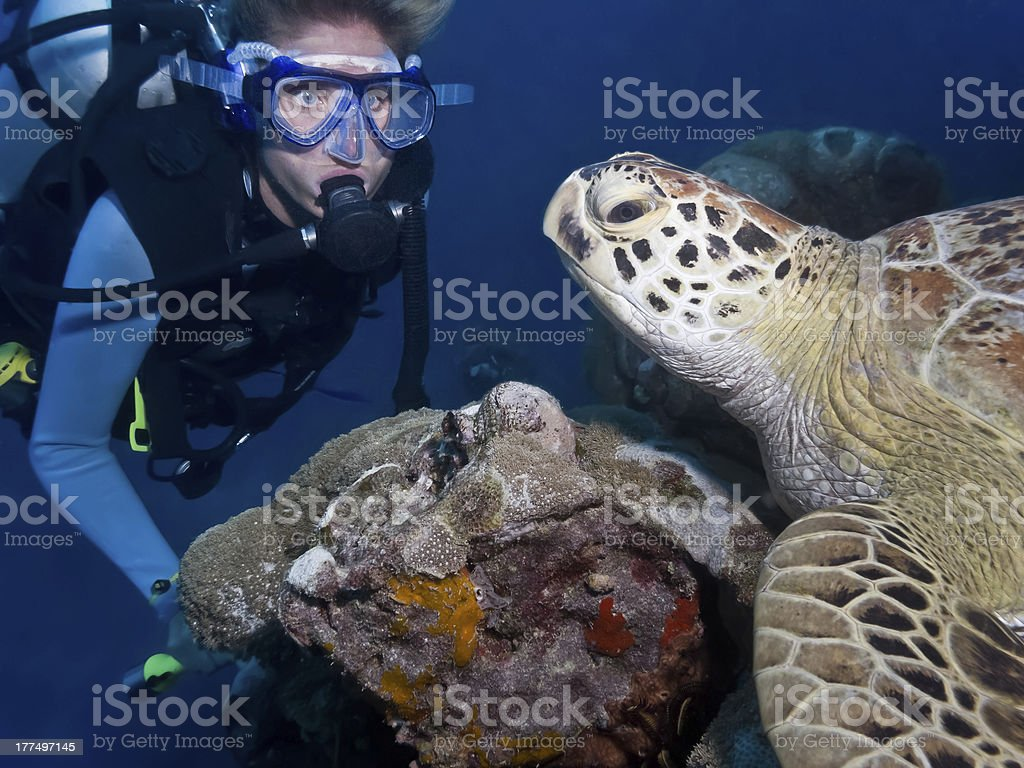 Diver and Turtle Great Barrier Reef stock photo