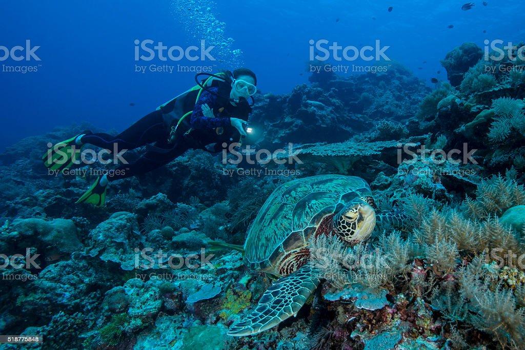 Diver and Turtle - Palau, Micronesia stock photo