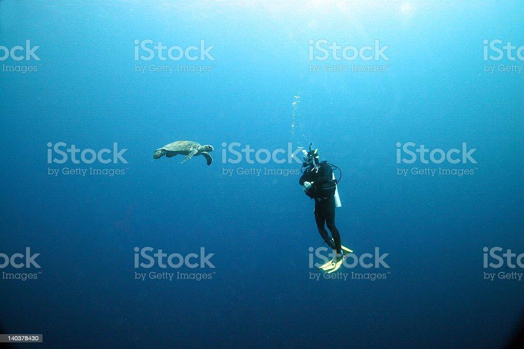 Plongeur et la tortue photo libre de droits