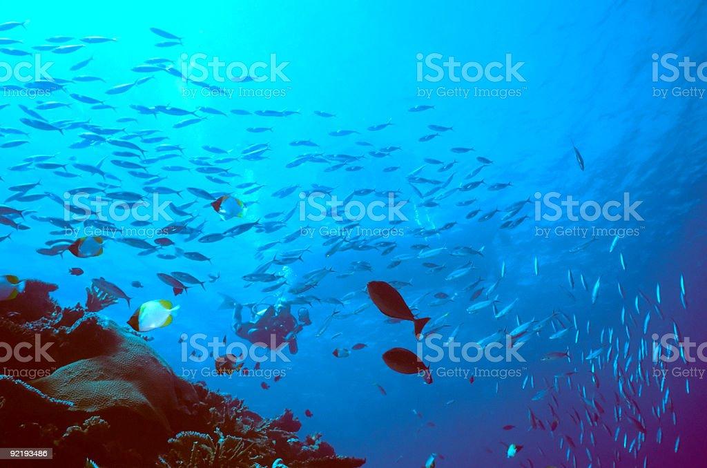 Plongeur décroissant photo libre de droits