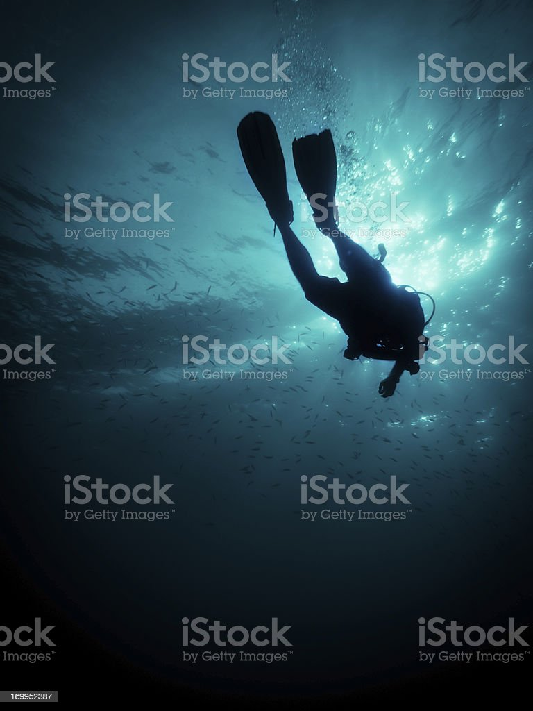 Diver Down royalty-free stock photo