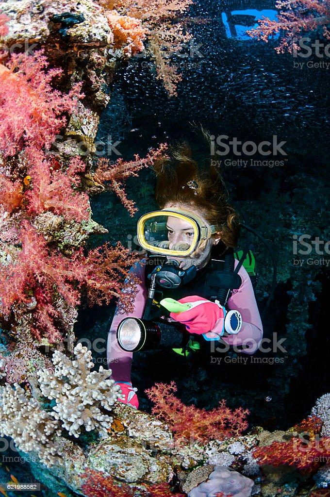 Diver Exploring Soft Corals of a Shipwreck stock photo
