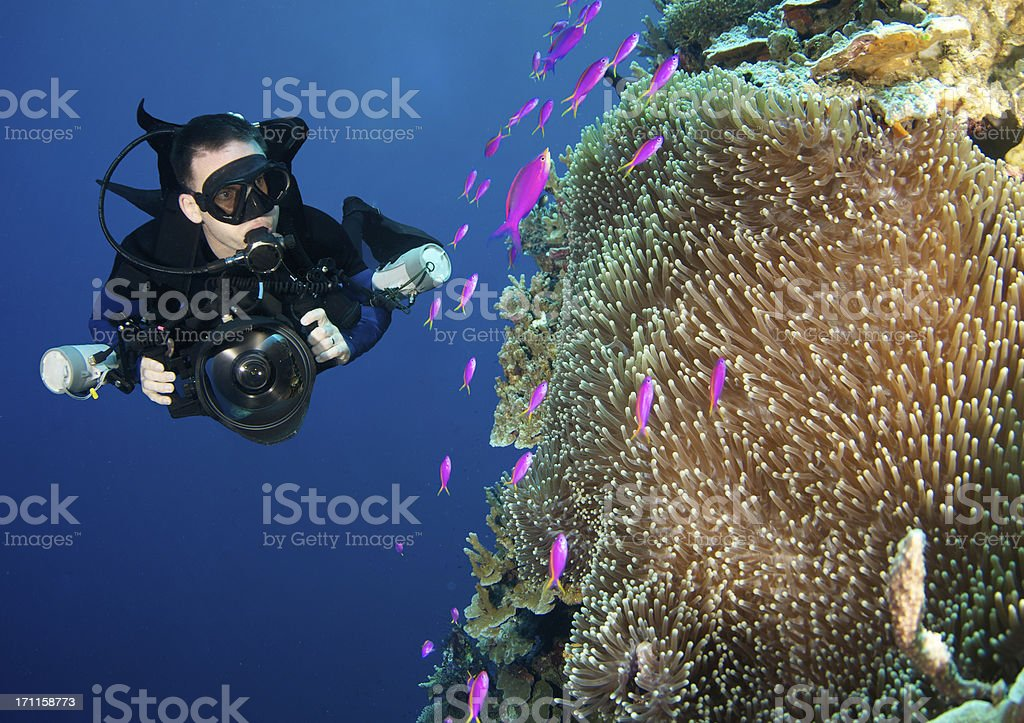Diver explres Basslets stock photo