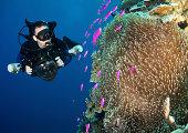 Diver explres Basslets