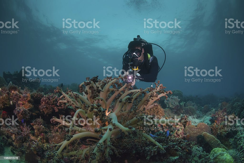 diver illuminates soft coral royalty-free stock photo