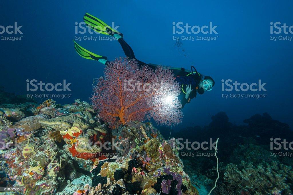 Diver in Palau, Micronesia stock photo
