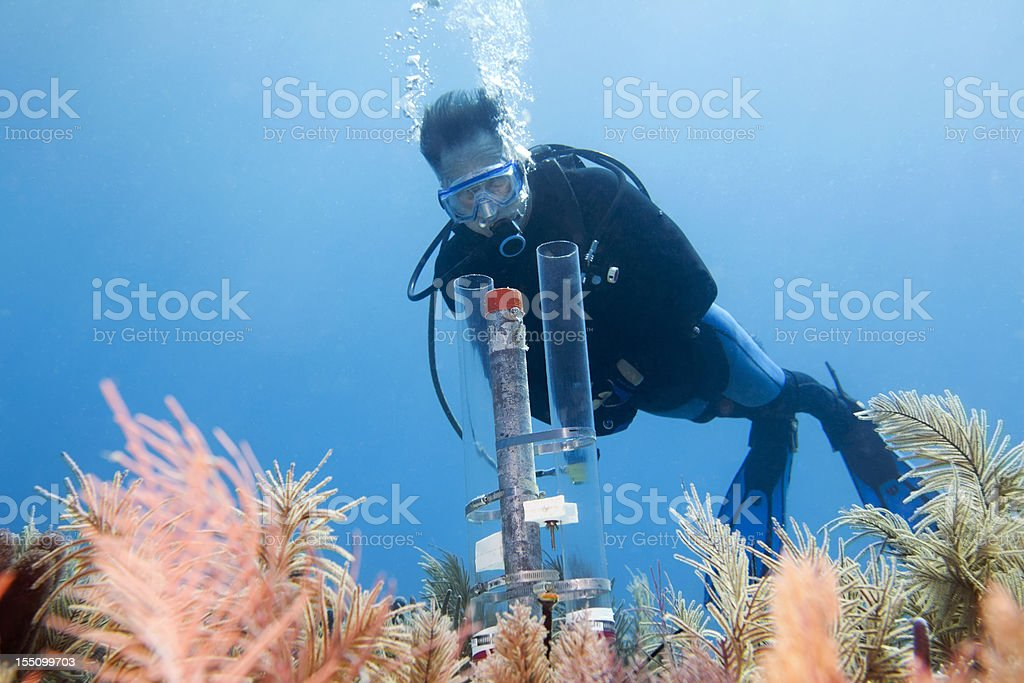 Diver looking at an underwater experiment in the Florida Keys stock photo