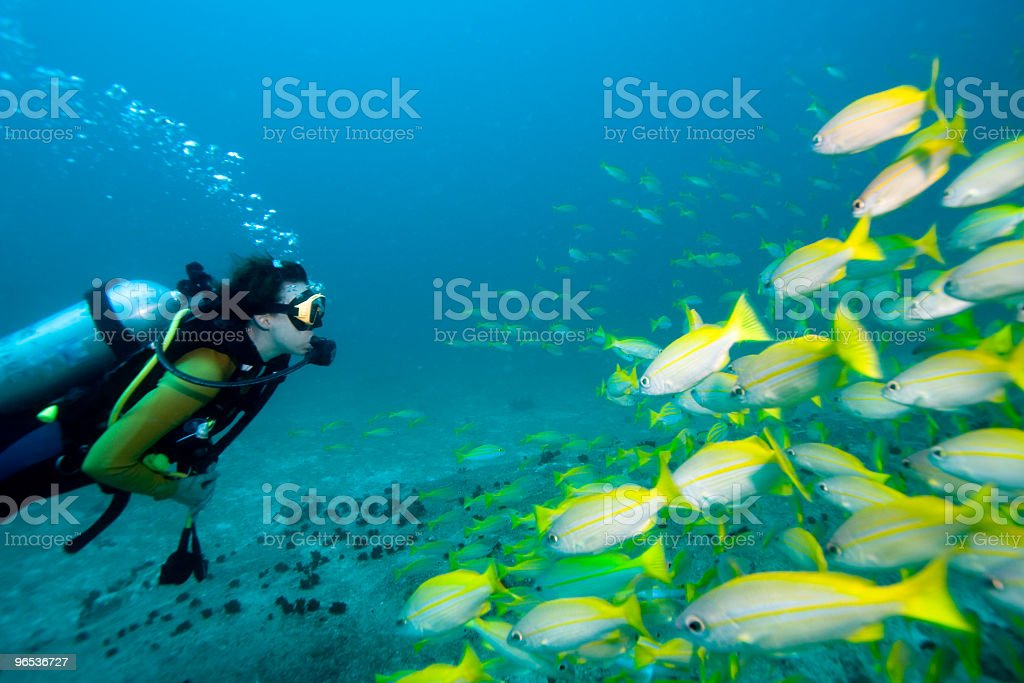 Diver meets fish stock photo