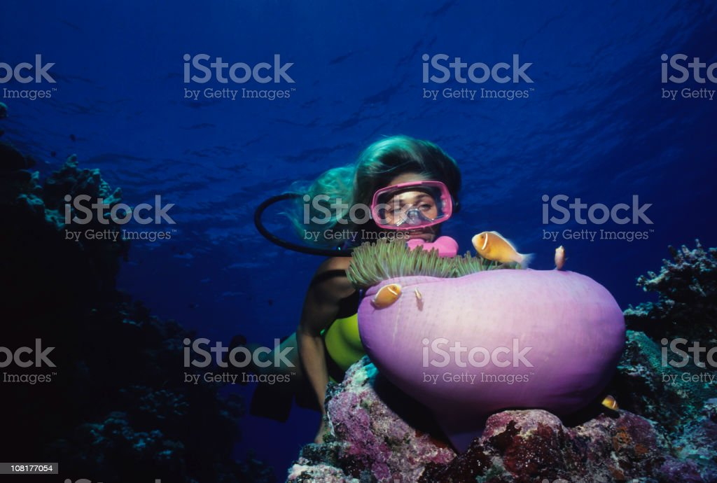 Diver Over Coral Reef With Anemone royalty-free stock photo