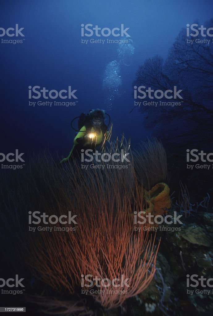 Diver Over Reef royalty-free stock photo