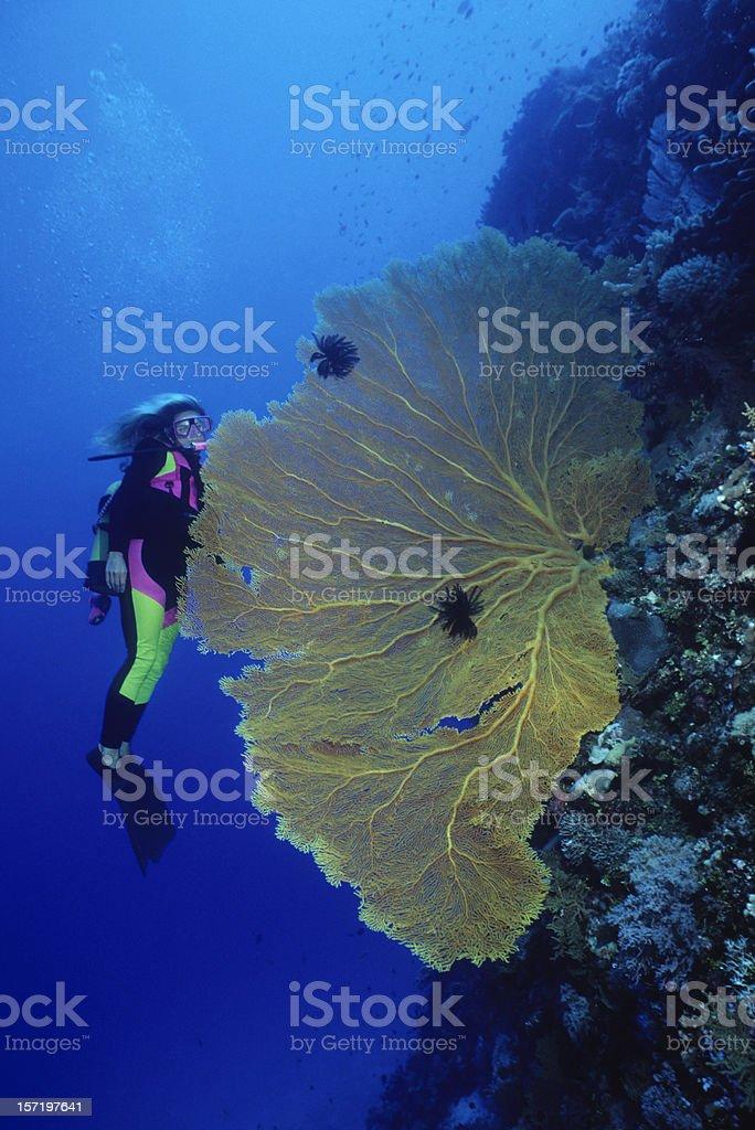 Diver & Sea Fan royalty-free stock photo