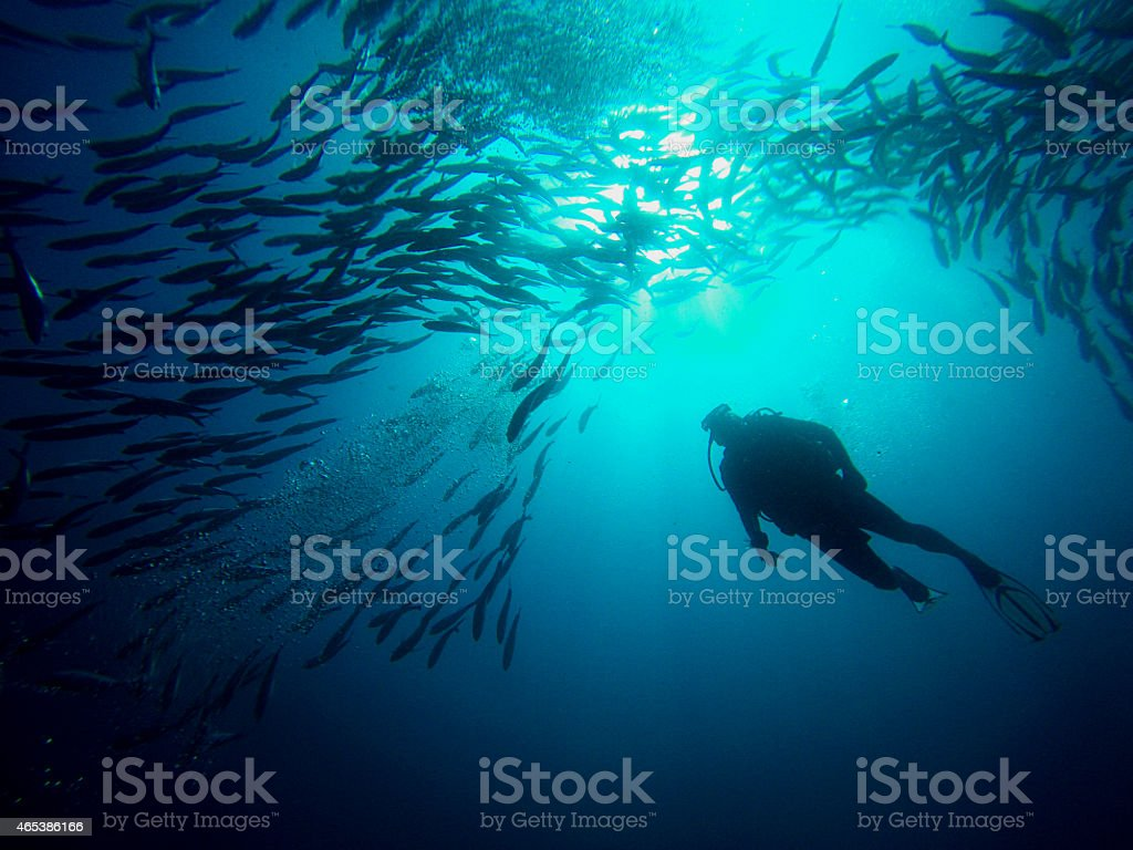 Diver swimming through a school of jacks Sipadan island Borneo stock photo