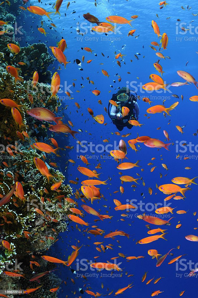 A diver underwater in a reef panorama stock photo