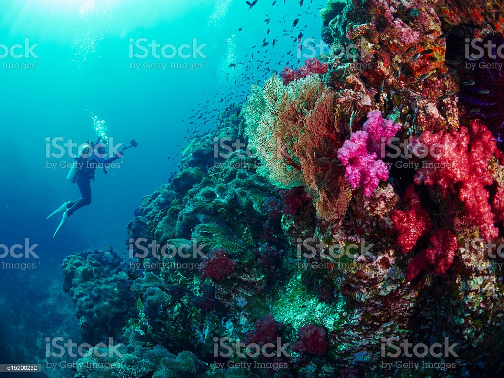 diver with coral stock photo