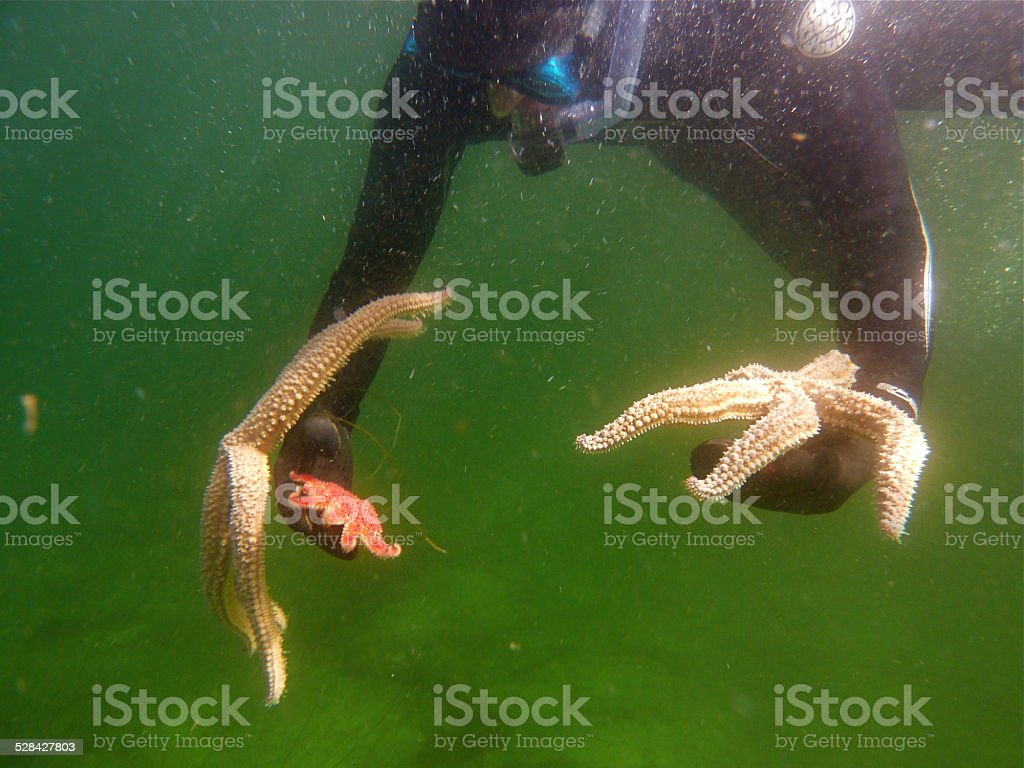 Diver with starfish stock photo