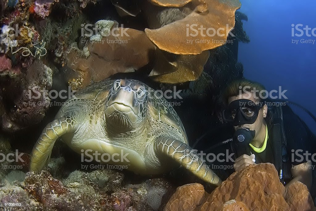 Diver with turtle in cave. Indonesia Sulawesi Lembehstreet stock photo
