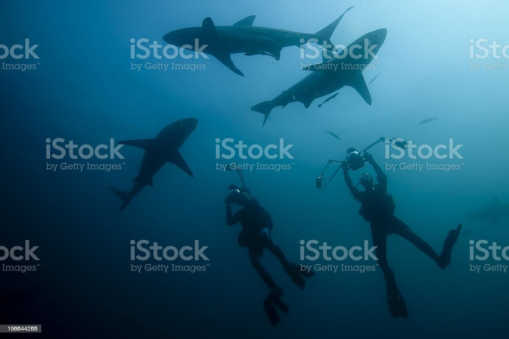 divers and shark silhouette royalty-free stock photo
