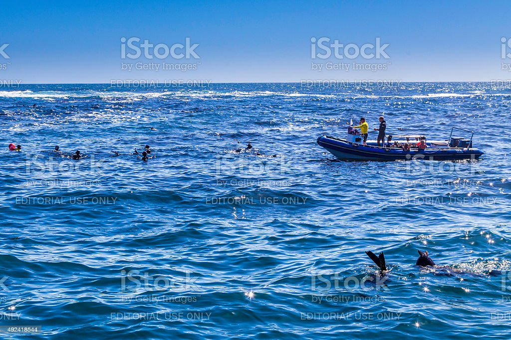Divers at Duiker Island, a Seal Island stock photo