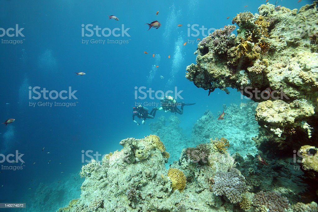 Divers in Red Sea stock photo