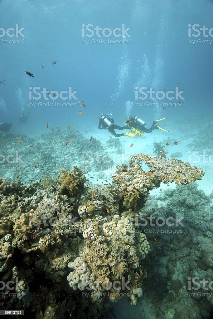 Les plongeurs en mer Rouge photo libre de droits