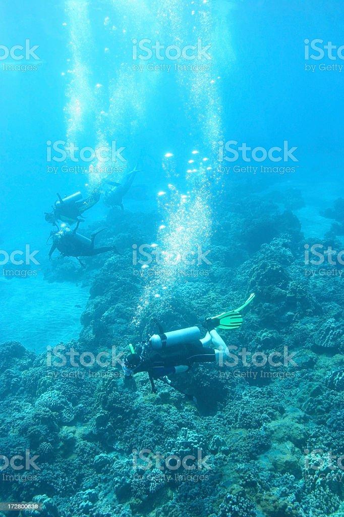 Les plongeurs de Coral Reef photo libre de droits
