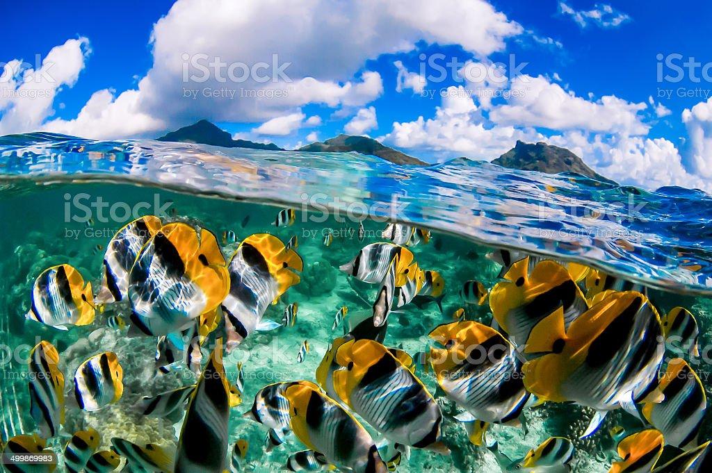 Diver's Paradise stock photo