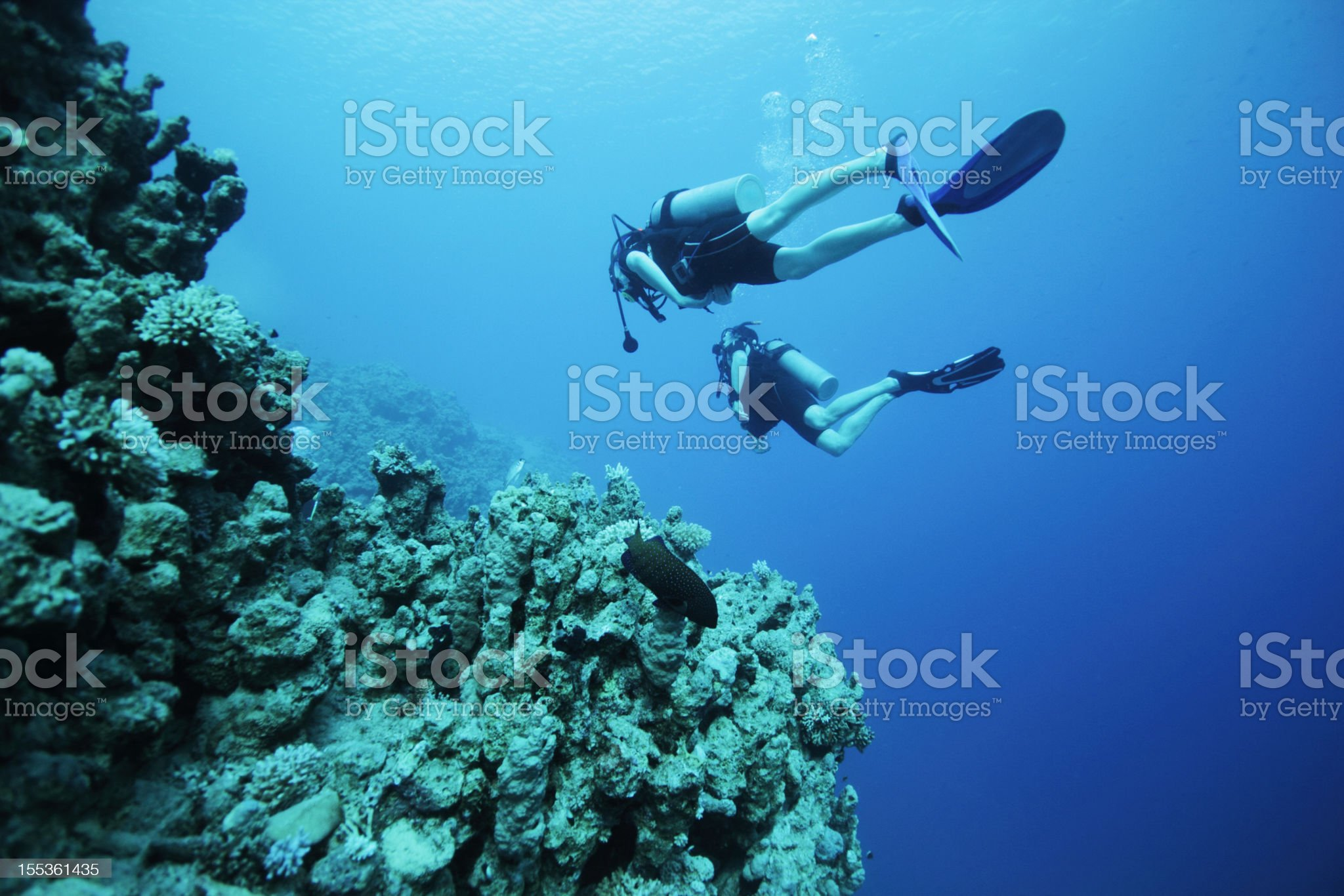 divers underwater royalty-free stock photo