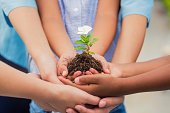 Diverse children hold young flowering plant