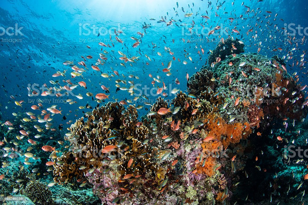 Diverse Coral Reef stock photo