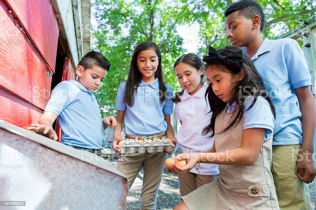 Diverse elementary students gathering chicken eggs during field trip stock photo