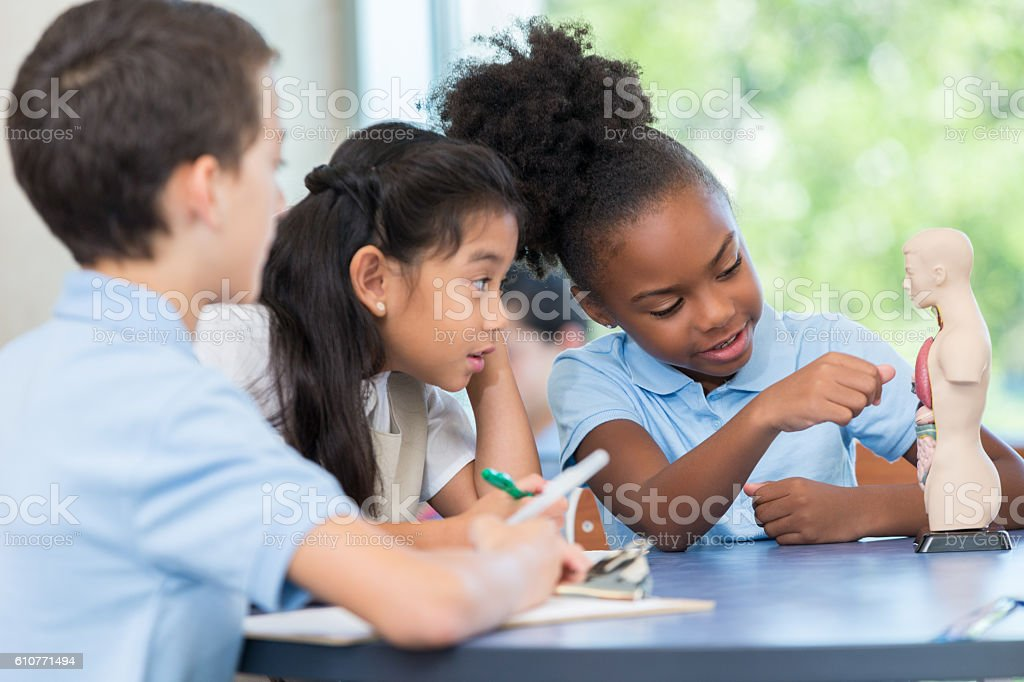 Diverse group of elementary age students study the human body stock photo