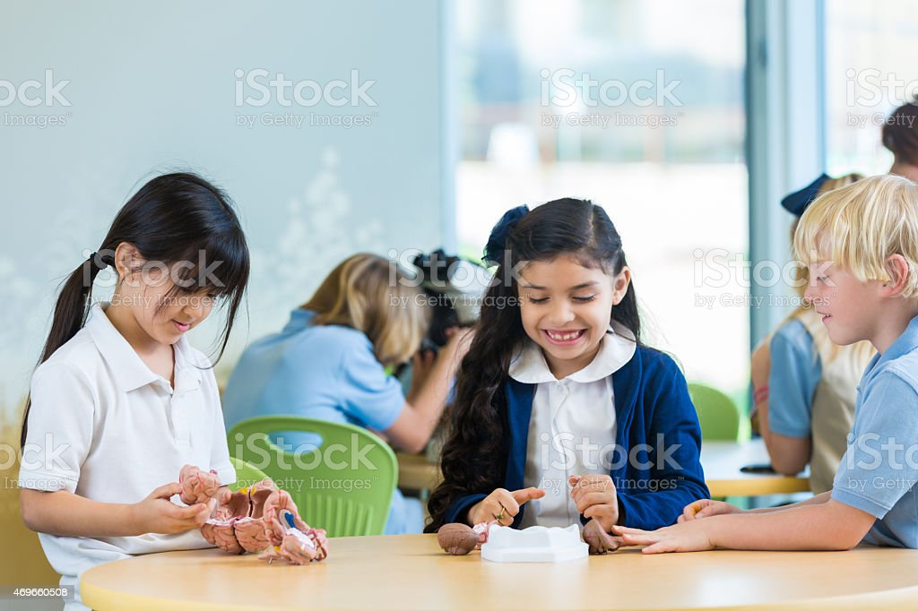 Diverse private elementary school students studying science models in classroom stock photo