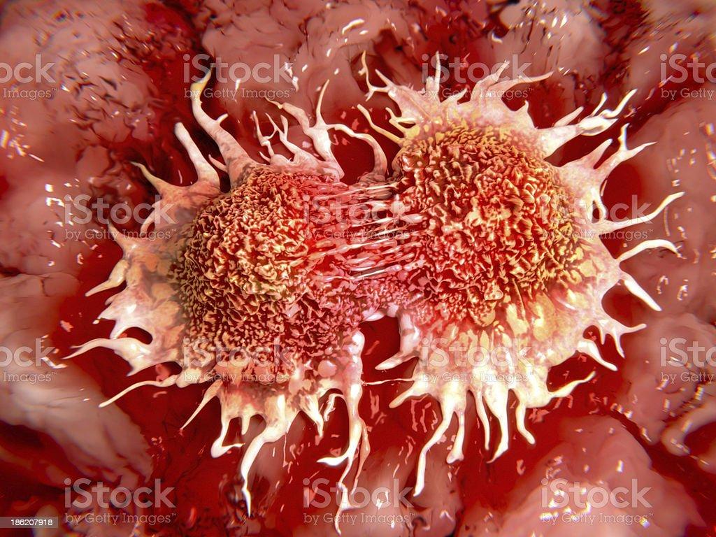 Dividing cancer cells stock photo
